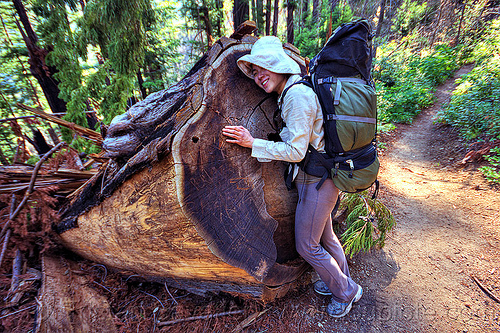 tree hugger - women hugging a fallen redwood tree, backpack, backpacking, big sur, fallen tree, forest, hiking, hugging, pine ridge trail, redwood tree, sequoia sempervirens, standing, tree log, tree trunk, treehugging, trekking, vantana wilderness, woman