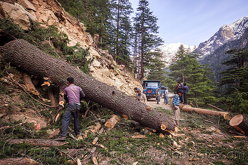 tree logging - tree log - gangotri road (india), bhagirathi valley, india, lumberjacks, men, mountain road, mountains, rolling, tree log, tree logging, trunk, workers, working