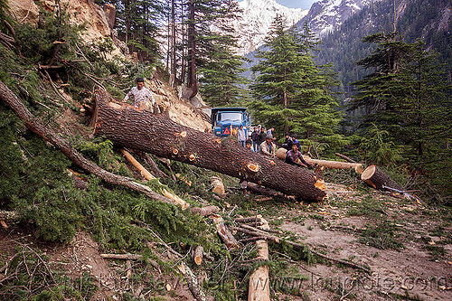 tree logging on the road to gangotri (india), bhagirathi valley, india, lumberjacks, men, mountain road, mountains, rolling, tree log, tree logging, truck, trunk, workers, working