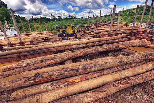 tree logs loaded on a logging barge, deforestation, environment, logging barge, logging camp, river barge, tracked crane, tree logging, tree logs, tree trunks