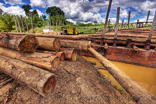 tree logs loaded on a logging barge, crane, deforestation, environment, logging camp, muddy, river, river barge, tracked crane, tree logging, tree trunks, water