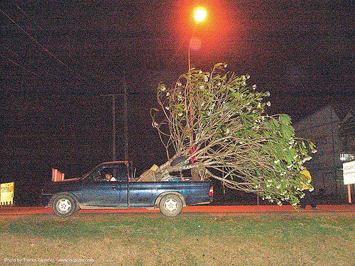 tree mover - thailand, night, pickup truck, tree mover, ประเทศไทย