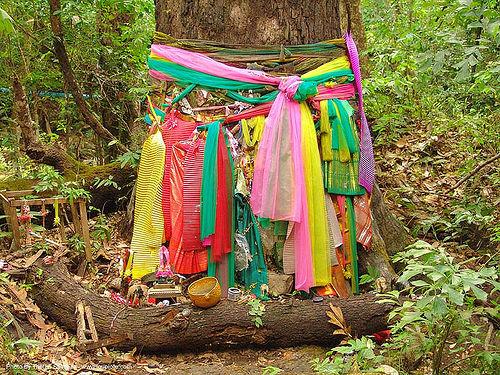 ผ้าแพรเจ็ดสี - tree offerings - thailand, altar, cloth, forest, tree offerings, trunk, ประเทศไทย, ผ้าแพรเจ็ดสี