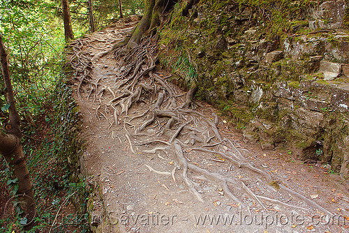 tree roots on foot trail, forest, sumela, sümela monastery, trabzon, trail, tree roots