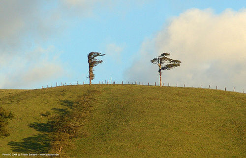 trees on top of windy hill, costa rica, hill, trees, wind, windy