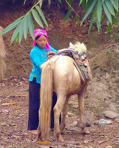 tribe girl and her horse - vietnam, bảo lạc, colorful, hill tribes, horse riding, horseback riding, indigenous, vietnam, vietnamese hmong horse, working animal