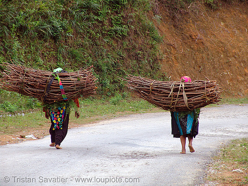 tribe girls carrying wood bundles - vietnam, children, girls, green hmong, hill tribes, hmong tribe, indigenous, kids, people, road, wood bundles