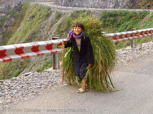 tribe kid carrying grass - vietnam, boy, child, hill tribes, indigenous, kid, ma pi leng pass, mã pí lèng pass