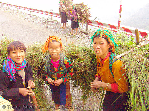 tribe kids carrying grass - vietnam, boys, children, colorful, hill tribes, indigenous, kid, little girl, road, vietnam