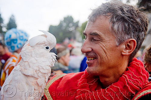 tristan savatier - burning man decompression 2009 (san francisco), burning man decompression, moluccan cockatoo, tristan savatier, white bird, white parrot, wildlife