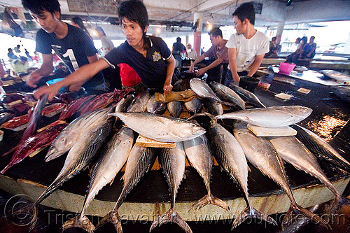 tuna fish stall at fish market, fish market, fishes, lahad datu, men, merchant, tuna, vendor
