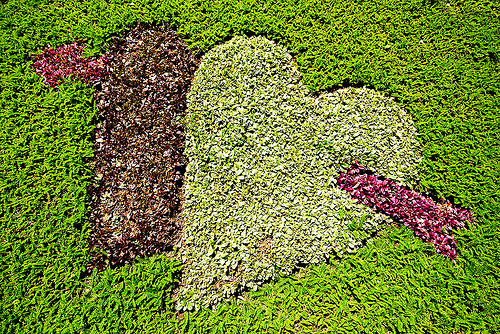 two hearts pierced with arrow - turf, arrow, grass, green, heart, la paz, lawn, love, pierced, symbol, turf