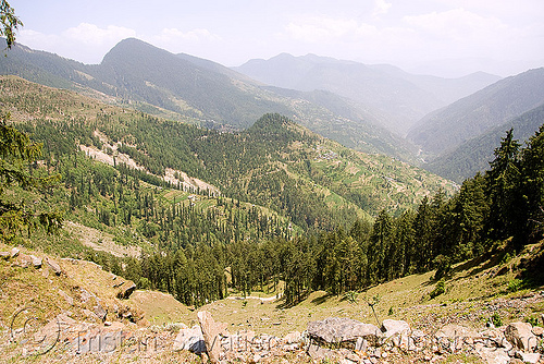 view from jalori pass (india), forest, jalori pass, jalorila, mountain pass, mountains, valley