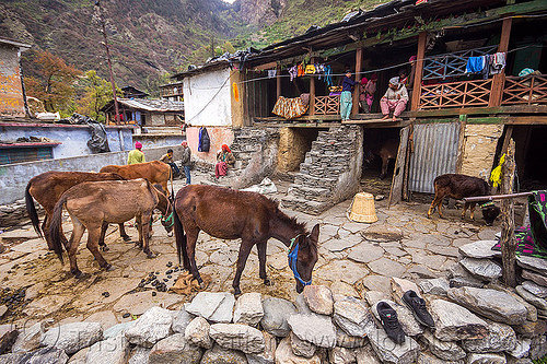 village house and horses (india), horses, house, janki chatti, mountains, village