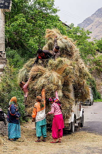 villagers loading hay on mahendra jeep (india), car, cargo, dhauliganga valley, freight, hay, india, jeep, load, loading, mahindra, men, mountains, overloaded, raini chak lata, road, women
