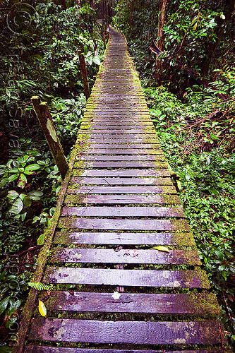 walkway in the jungle - niah caves (borneo), borneo, gua niah, jungle, malaysia, mossy, niah caves, pathway, rain forest, slippery, vanishing point, walkway, wood