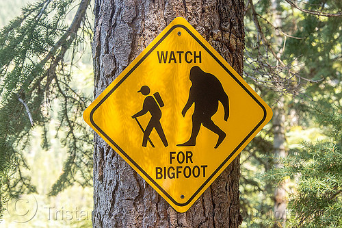 watch for bigfoot - sign, bigfoot, caution, forest, hiker, hiking, sasquatch, sign, tree, trekker, trekking, trunk, warning, wilderness, yellow