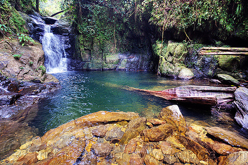 waterfall and swimming hole - garden of eden - mulu (borneo), cascade, falls, gunung mulu national park, jungle, rain forest, river, water, waterfall