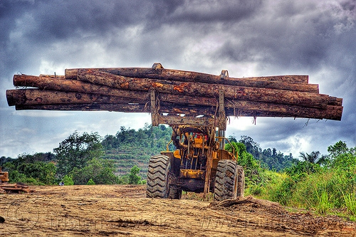 wheel loader with logging fork moving tree logs, at work, borneo, cat 966c, caterpillar 966c, clouds, cloudy sky, deforestation, environment, front loader, logging camp, logging forks, malaysia, tree logging, tree logs, tree trunks, wheel loader, working, yellow
