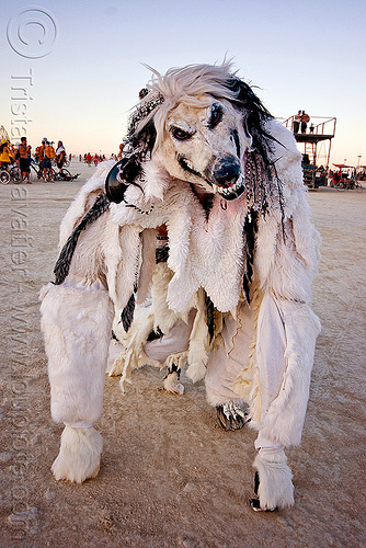 white wolf costume, burning man, mask, people, taxidermed, taxidermied, taxidermy