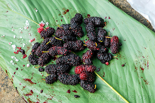 wild mulberries (india), berries, east khasi hills, food, fruits, leaf, mawlynnong, meghalaya, morus, mulberries