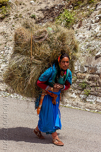 woman carrying large bundle of hay (india), alaknanda valley, bundle, carrying, hay, india, mountains, road, woman
