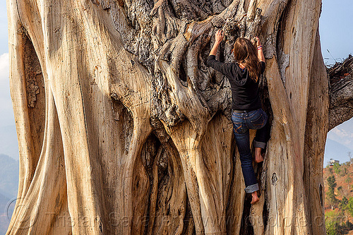 woman climbing big dead tree, anne-laure, climbing, dead tree, nuwakot, tree trunk, woman