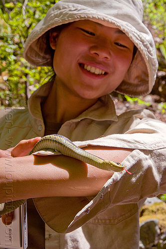 sharon holding a garter snake, big sur, black, colubrid, pine ridge trail, reptile, sharon, striped, strips, sun hat, terrestris, thamnophis elegans, tongue, trekking, vantana wilderness, western terrestrial garter snake, wildlife, woman, yellow