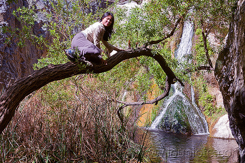 woman on a tree - darwin falls, darwin falls, death valley, sharon, tree, water, waterfall, woman