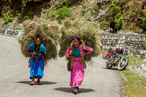 women carrying big bundles of hay on their back (india), alaknanda valley, bundle, carrying, hay, motorbike touring, motorcycle touring, mountains, people, road, royal enfield bullet, women