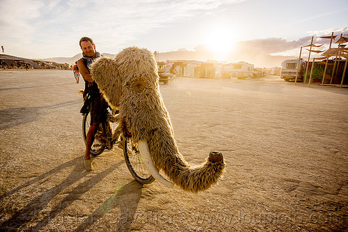 woolly mammoth bicycle - burning man 2015, bicycle, bike, fur, furry, head, mammoth, man, riding, trunk, tusk, unidentified art
