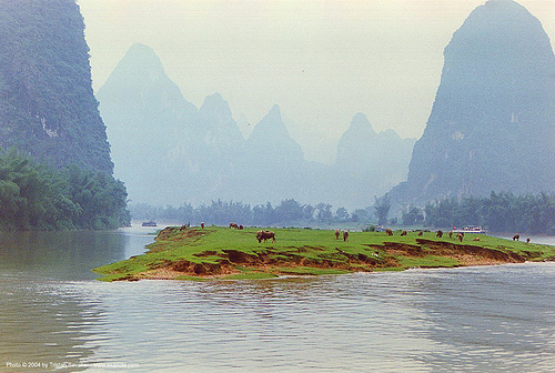 yangtze river near guilin (china) - 桂林附近的长江(中国), china, cows, guilin, island, water, yangtze river, 桂林市区, 长江
