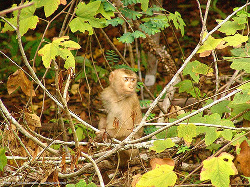 young monkey - thailand, forest, monkey, wildlife, ประเทศไทย