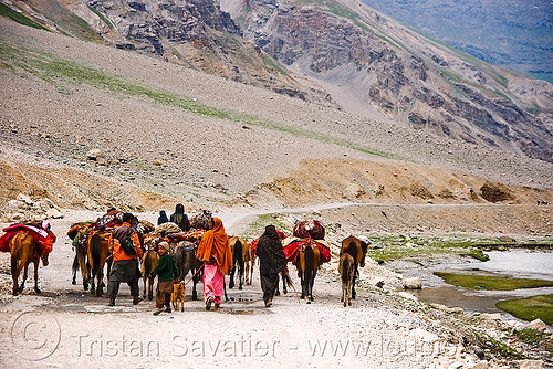 zojila pass - nomads with horses - drass valley - leh to srinagar road - kashmir, caravan, dras valley, drass valley, horse riding, horseback riding, india, kashmir, kashmiri gujjars, mountains, muslim, nomads, pack animal, pack horses, road, zoji la, zoji pass, zojila pass