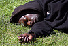 black man sleeping on grass, african american man, black man, grass, green, hand, hood, hooded, lying down, sleeping, turf