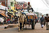 ox cart transporting freight (india), bags, cargo, carriage, cow, freight, load, men, ox cart, sacks, sitting, street, transport, transporting, varanasi, walking