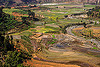 terrace farming - paddy fields (nepal), agriculture, paddy fields, rice fields, river, terrace farming, terrace fields, valley