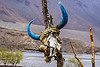 yak skull with horns painted blue (nepal), annapurnas, blue, horns, kali gandaki valley, mountains, painted, skeleton, yak skull