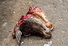 severed cow heads on the ground (india), beef, cow heads, east khasi hills, flies, meat market, meat shop, meghalaya, pynursla, raw meat, severed head