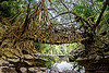 living root bridge in east khasi hills (india), banyan, east khasi hills, ficus elastica, footbridge, jingmaham, jungle, living root bridge, mawlynnong, meghalaya, rain forest, river bed, rocks, roots, strangler fig, trees, wahthyllong, water