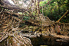 living root bridge spans over stream - mawlynnong (india), banyan, east khasi hills, ficus elastica, footbridge, jingmaham, jungle, living root bridge, mawlynnong, meghalaya, rain forest, river, roots, strangler fig, trees, wahthyllong, water
