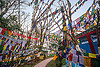 prayer flags - observatory hill - darjeeling (india), buddhism, darjeeling, hindu temple, hinduism, observatory hill, prayer flags, tibetan, trees