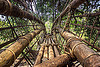 bamboo bridge (india), bamboo bridge, east khasi hills, footbridge, jungle, mawlynnong, meghalaya, rain forest, river, water