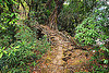 living root bridge over small stream near mawlynnong (india), banyan, east khasi hills, ficus elastica, footbridge, jungle, living root bridge, mawlynnong, meghalaya, rain forest, roots, strangler fig, trail, trees