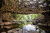 living root bridge over river - mawlynnong (india), banyan, east khasi hills, ficus elastica, footbridge, jingmaham, jungle, living root bridge, mawlynnong, meghalaya, rain forest, river, roots, strangler fig, trees, wahthyllong, water