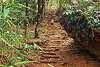 foot path with stone steps in the east khasi hills (india), east khasi hills, jungle, man, mawlynnong, meghalaya, rain forest, stairs, steps, stones, trail