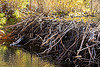 beaver dam in lundy canyon (california), beaver dam, california, eastern sierra, lake, lundy canyon, river, tree branches, tree limbs, valley, water