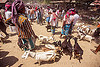 farmers with goats on leash - cattle market (india), cattle market, crowd, goat kids, goats, leash, men, west bengal