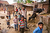 man and boys (and water buffaloes) in indian village, boys, children, cows, crowd, khoaja phool, kids, man, manger, village, water buffaloes, खोअजा फूल