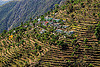 small village and terrace fields in himalayas (india), agriculture, mountains, terrace farming, terrace fields, valley, village